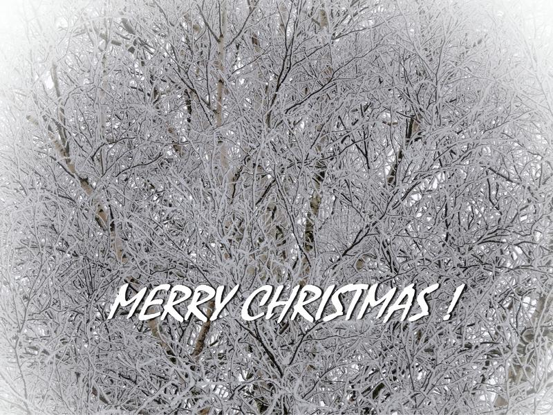 Merry Christmas card done using trees in winter , Lithuania. Beautiful natural snowy trees and note - Merry Christmas stock photos