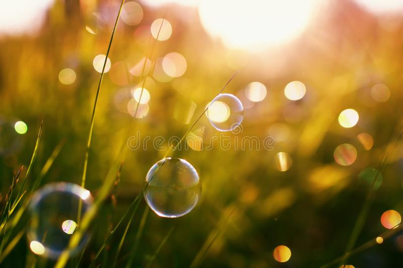 Beautiful natural with summer clear green meadow and soap bubbles brightly shimmer and lie on the orange sunset background stock image
