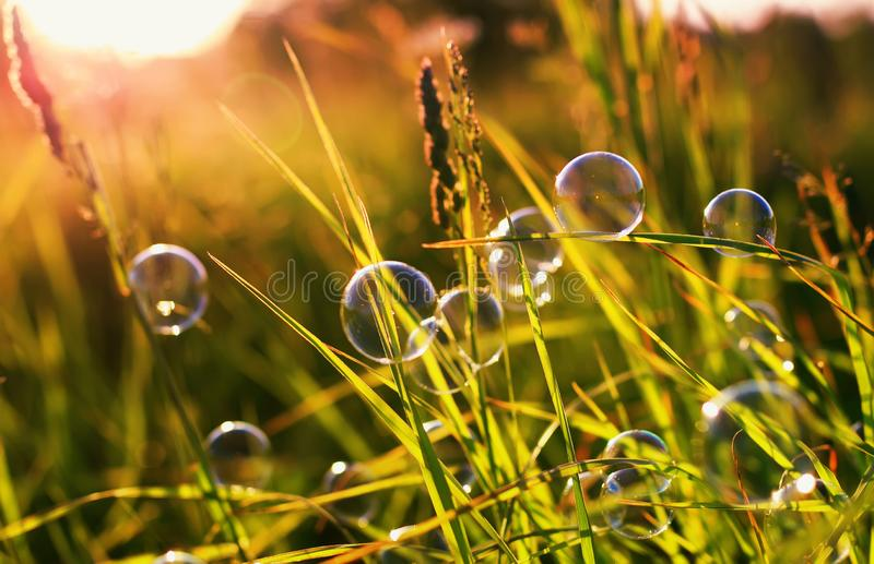 Beautiful natural with summer clear green meadow and soap bubbles brightly shimmer and lie on the orange sunset background royalty free stock image