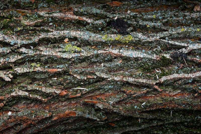 Beautiful natural texture of bark wood plank use as nature wooden textured royalty free stock images