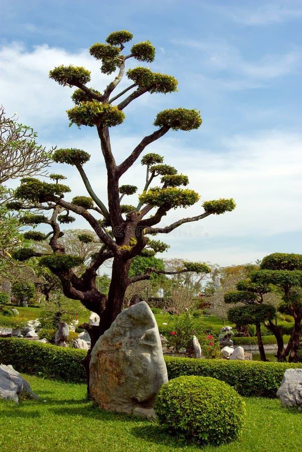 Download Beautiful Natural Tropical Garden Stock Photo - Image: 12879170