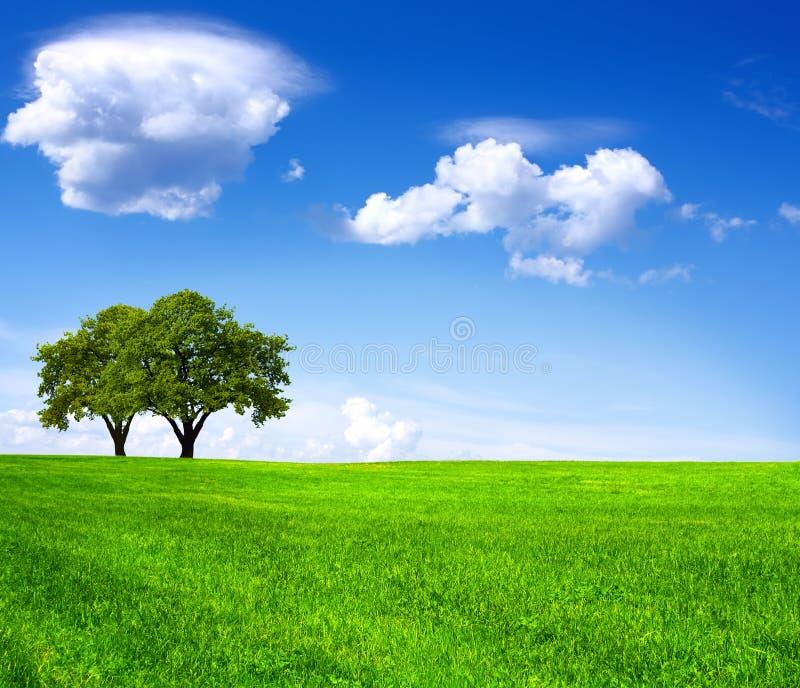 Beautiful nature stock image