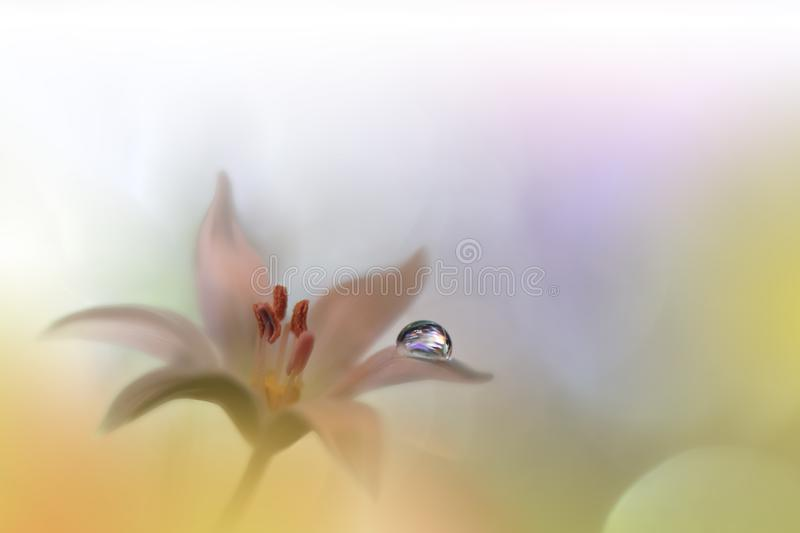 Beautiful Nature Background.Abstract Artistic Wallpaper.Art Macro Photography.Creative Amazing Floral Photo.White Flower.Waterdrop. Incredibly beautiful Nature royalty free stock image