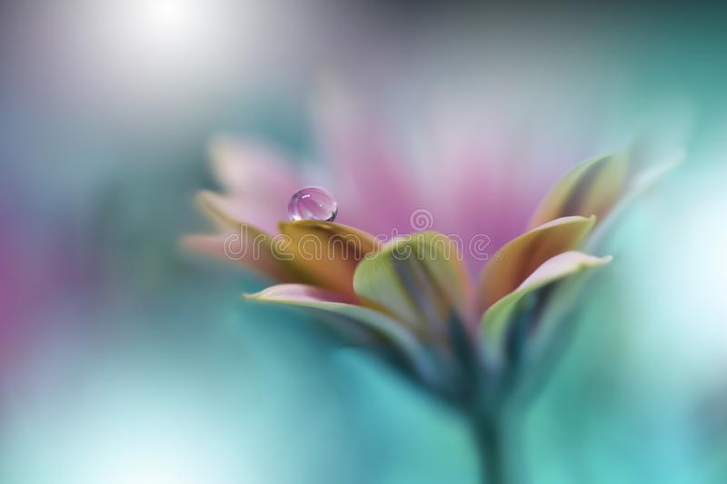 Beautiful Nature Background.Abstract Artistic Wallpaper.Art Macro Photography.Spring Flowers.Water drop.Plant,pure.Colorful,soft stock photos
