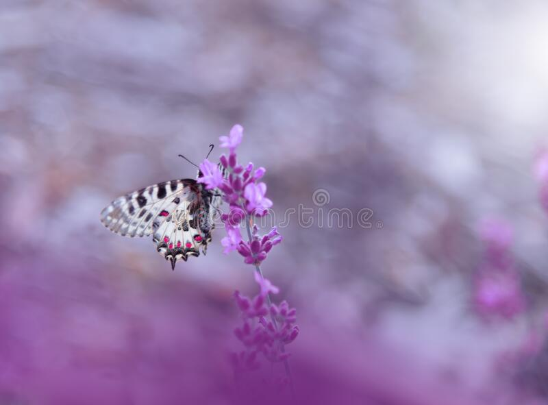 Beautiful Nature Background.Abstract Wallpaper.Celebration.Artistic Spring Flowers.Art Design.Violet Color.Summer,love.Butterfly. royalty free stock photography