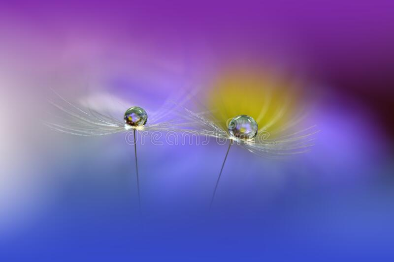 Beautiful Nature Background.Abstract Wallpaper.Celebration,love.Holidays.Violet Background.Blue Color.Artistic Flowers.Art Design. Incredibly beautiful Nature stock images