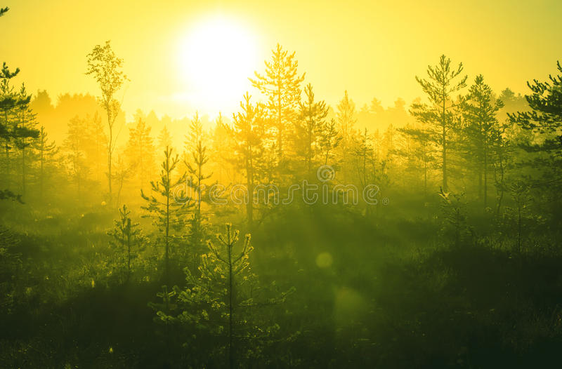 nature wallpaper editing: Beautiful Nature Background Stock Photo