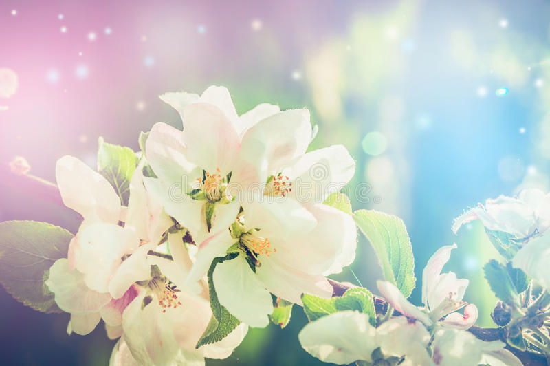 Beautiful nature background with spring blossom and bokeh. Toned stock photo