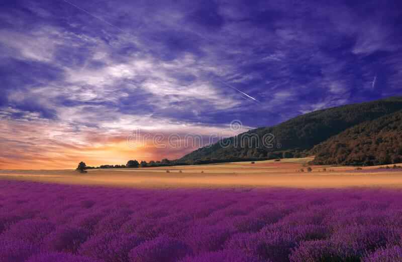 Beautiful Nature Background.Violet Wallpaper.Lavender Flowers.Summer Sunset Landscape.Blue Sky,clouds.Aroma,field.Summertime,photo stock photography