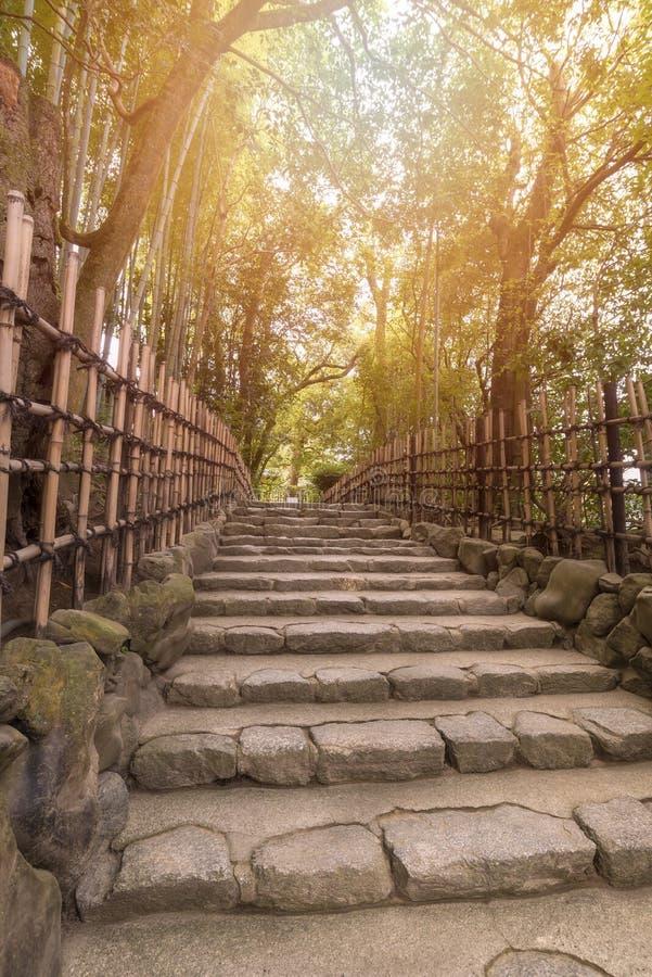 Beautiful nature bamboo grove in autumn season in japanese zen garden stock images