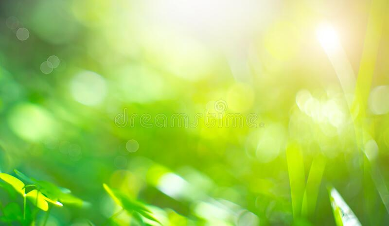 Beautiful Nature Blurred Background. Green Bokeh. Summer or spring abstract backdrop with fresh green leaves stock photos
