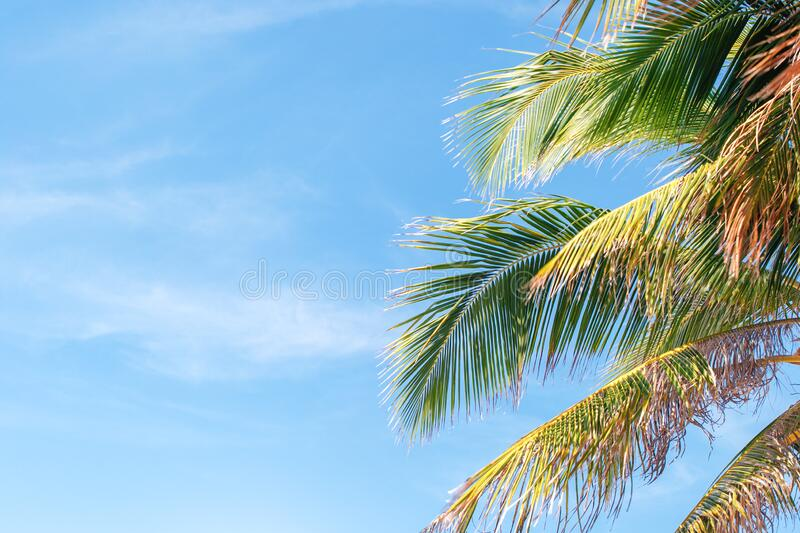 Beautiful nature green palm leaf on tropical beach. With copy space royalty free stock image