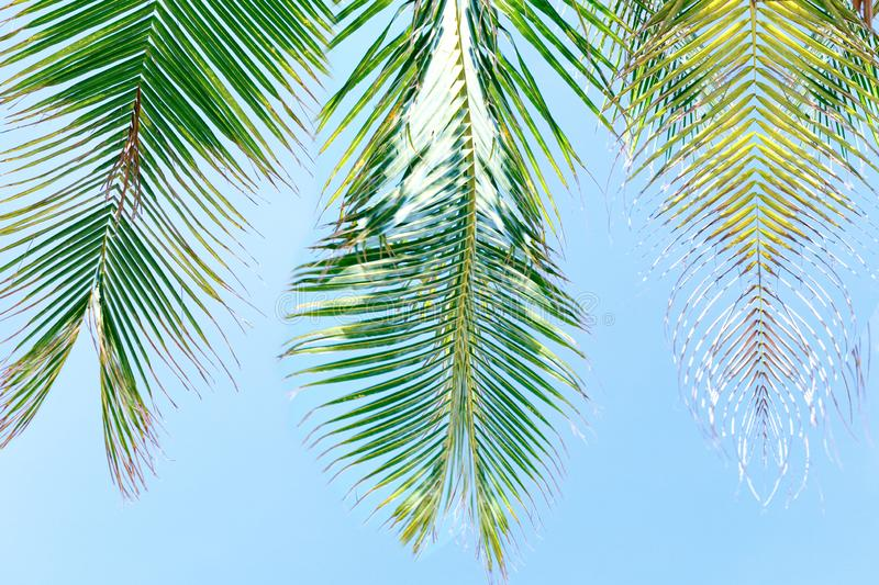 Beautiful nature green palm leaf on tropical beach. Summer vacation background royalty free stock photo