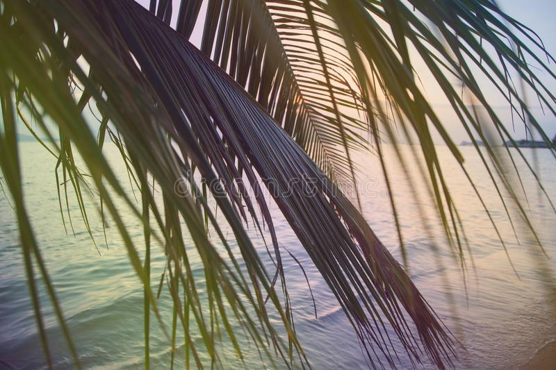 Beautiful nature green palm leaf on tropical sunset beach with bokeh light wave abstract background. Copy space of summer vacation. Vintage tone filter color royalty free stock photos
