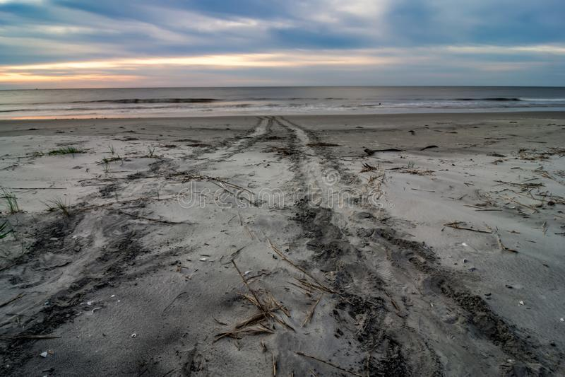 Beautiful nature on hunting island south carolina royalty free stock photography