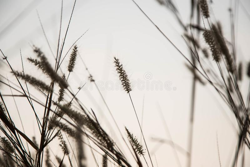 Beautiful nature landscape - Alpine meadow. Grass closeup with sunbeams. Beautiful Nature landscape with sun flare. Vintage Sepia royalty free stock photos