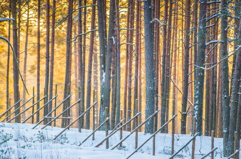 Beautiful nature landscape in winter. Sunrise orange light royalty free stock images