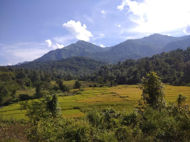 Beautiful nature and mountain Indian forest royalty free stock photography