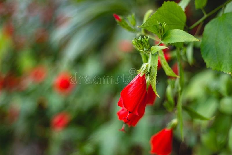Red flowers on a green leaves background royalty free stock photos