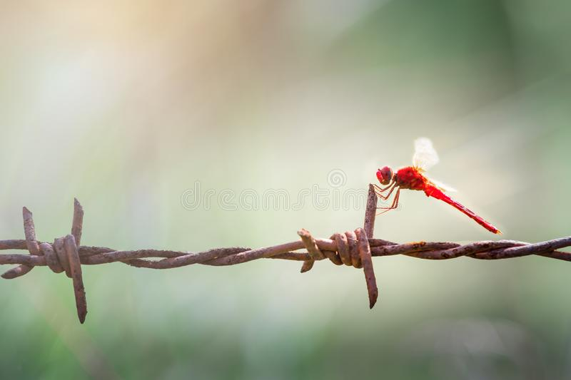 Beautiful nature picture of dragonfly royalty free stock image