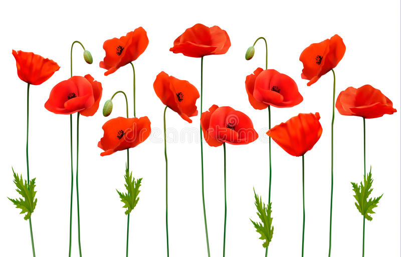 Beautiful nature poppy background. vector illustration
