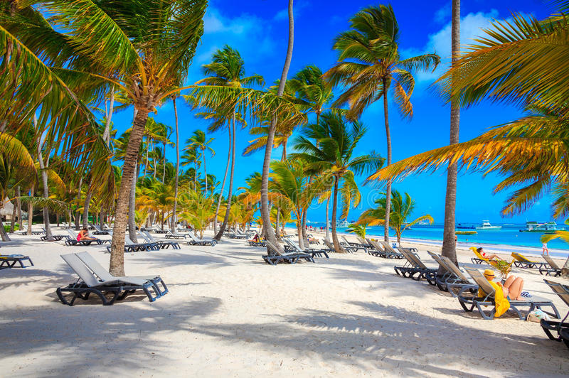 Beautiful nature of Punta Cana royalty free stock photo