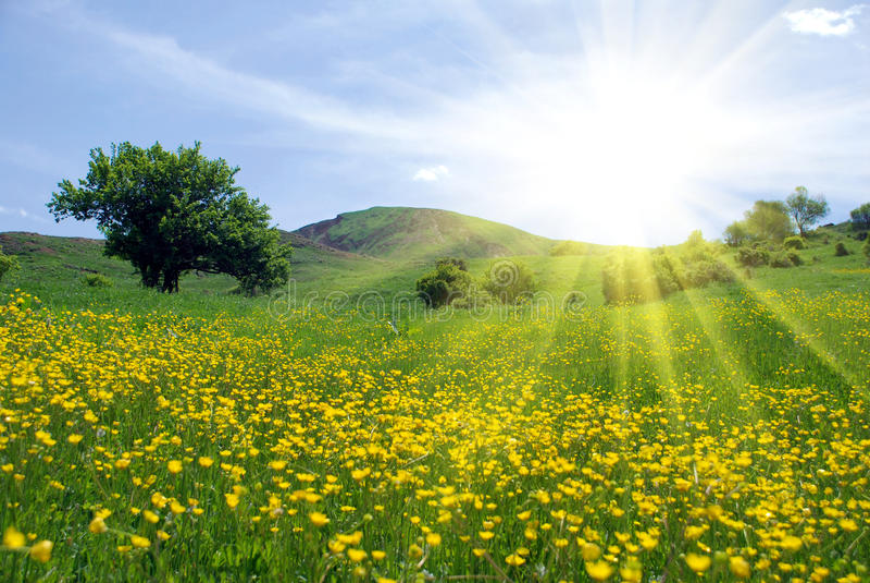 Beautiful nature scene stock images