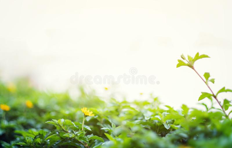 Beautiful nature scene with blooming in sun flare. Summer flowers. Beautiful meadow. Summer background. Ok stock images