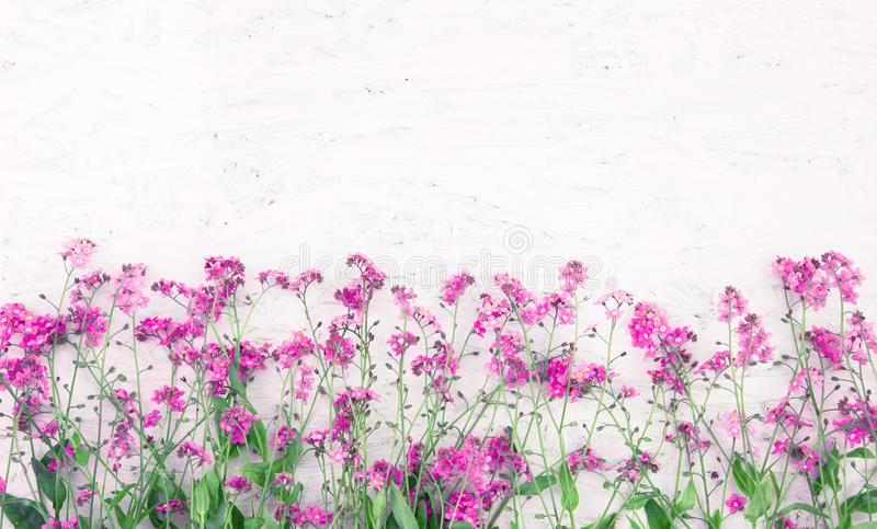 Beautiful Nature Spring Flower background. With copy space for design. Border of many small pink wild flowers at the bottom white background. Top view. Greeting royalty free stock image