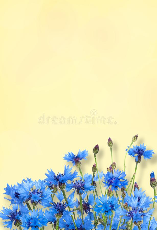 Nature Summer Flowers background. Beautiful Nature Summer Flowers background. Rustic Frame of Blue Cornflower on yellow background. Template for Greeting card royalty free stock images