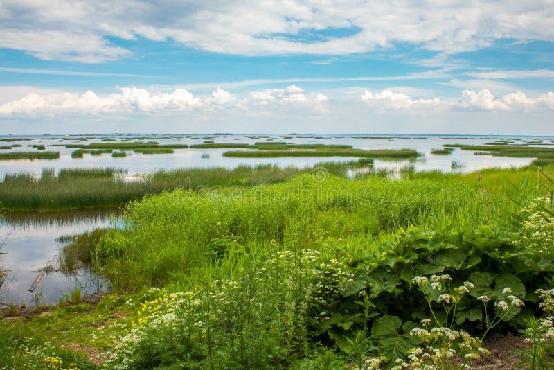 Beautiful nature swamp area water and greenery stock image