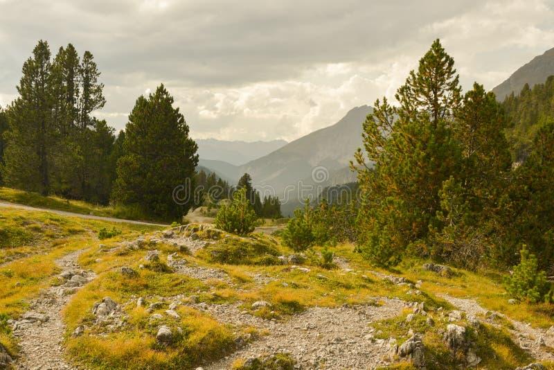 Beautiful nature in Swiss Natinal park near Ofenpass. In Switzerland stock photos