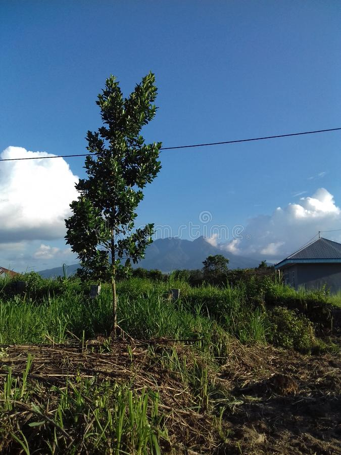The beautiful of nature. Tree, wood, vegetation, land, natural, plant, greens, environment, mountain, view, landscape, cloudly, sky, skies, indonesia royalty free stock photography