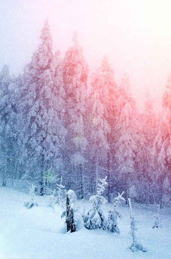 Beautiful New Year Landscape with Christmas Trees in New Year`s Illuminations During Snowfall royalty free stock image