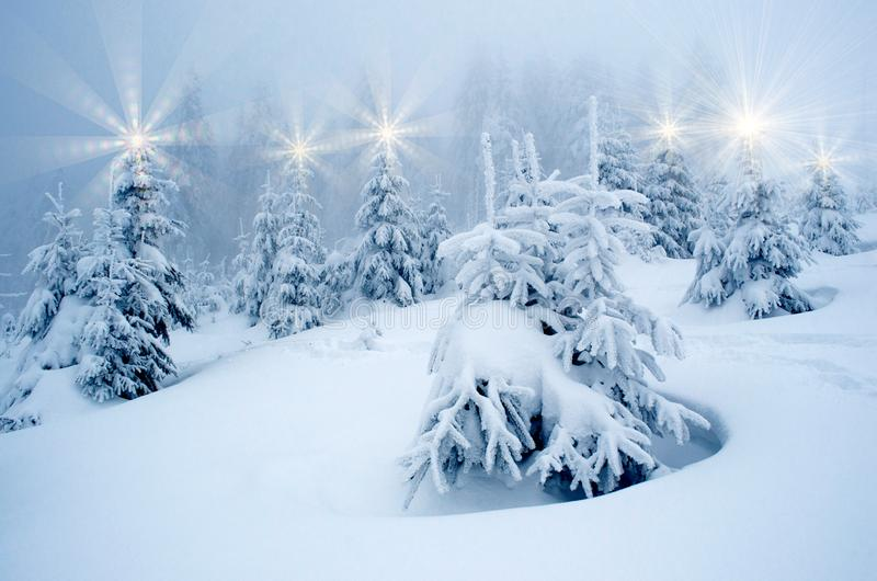 Beautiful New Year Landscape with Christmas Trees in New Year`s Illuminations During Snowfall royalty free stock photos