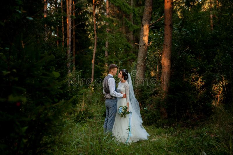 Beautiful newlyweds couple walking in the woods. Honeymooners. Bride and groom holding hand in pine forest, photo for Valentine`s royalty free stock photo