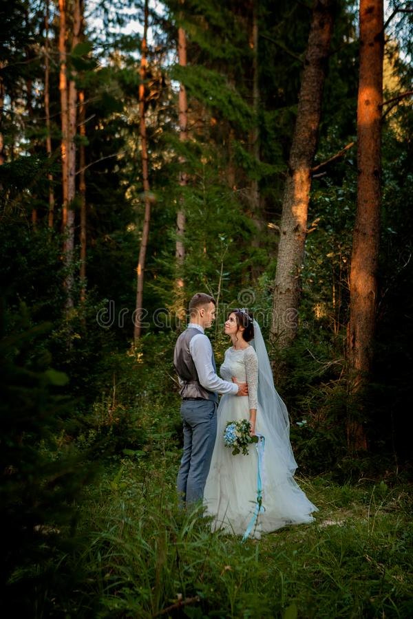 Beautiful newlyweds couple walking in the woods. Honeymooners. Bride and groom holding hand in pine forest, photo for Valentine`s stock photography
