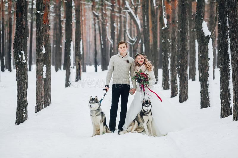 Beautiful newlyweds with two siberian husky are posed on background of snowy forest. Artwork. Copy space royalty free stock photo