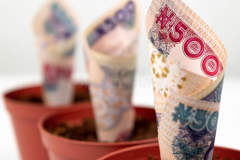 Close up three Nigerian banknotes money. Five hundred naira notes in flower pots for financial investment and savings concept. royalty free stock photos