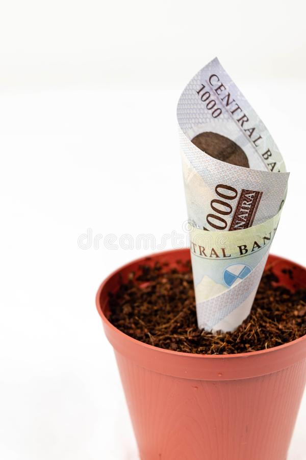 Nigerian money. Five hundred naira notes in flower pots for financial investment and savings concept with copy space for text stock images