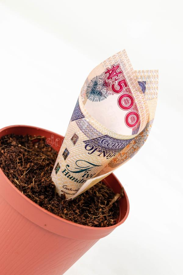 Nigerian money. Five hundred naira notes in flower pots for financial investment and savings concept royalty free stock image
