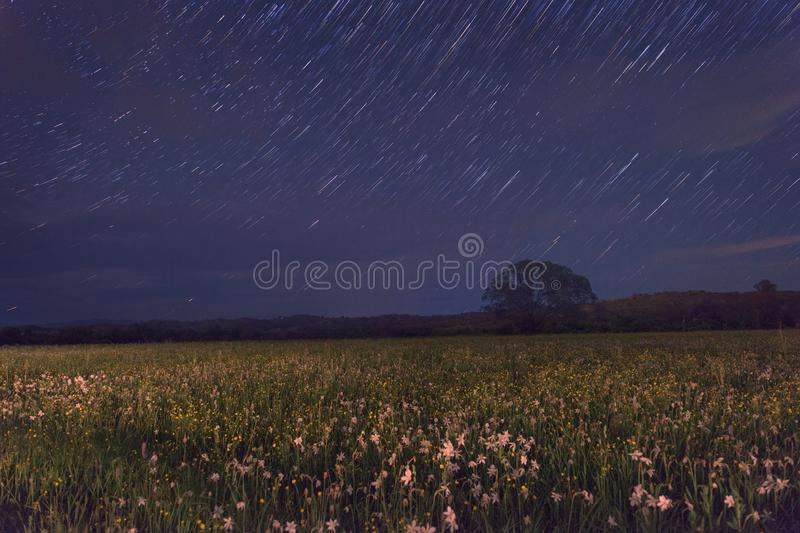 Beautiful night in the flowering valley, scenic landscape with wild growing flowers and blue starry sky, star trails royalty free stock photo