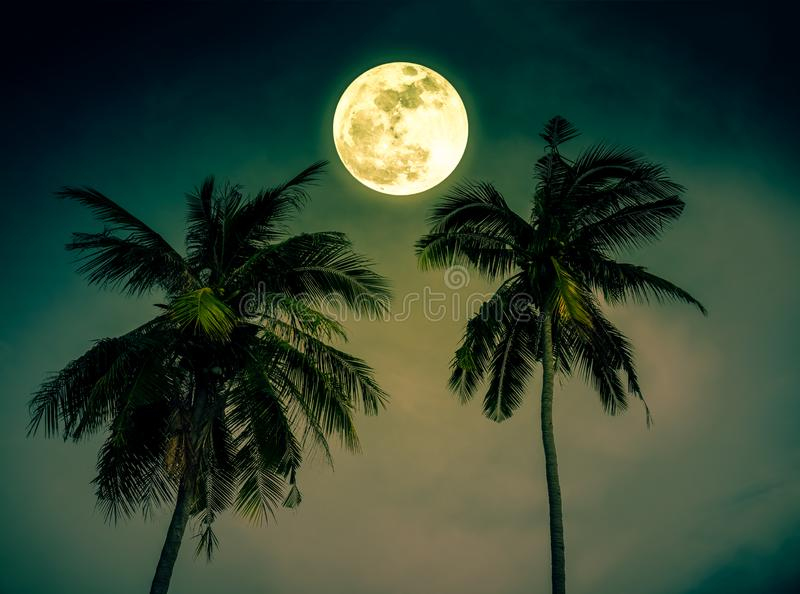 Beautiful night landscape of green sky with bright full moon over coconut palm. Serenity nature background. Outdoor at nighttime. royalty free stock photography