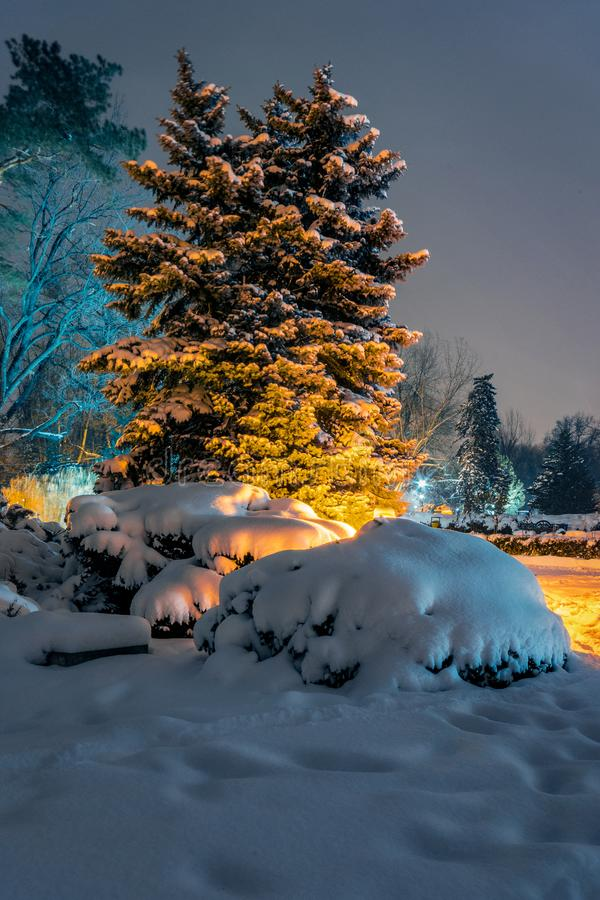 Beautiful night shot in the park of a winter scene with trees co stock photo