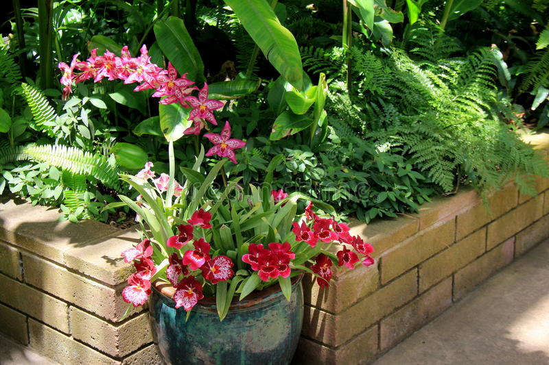 Beautiful nursery garden filled with potted exotic orchids. Low brick encasement filled with lush greenery and colorful exotic orchids royalty free stock photo