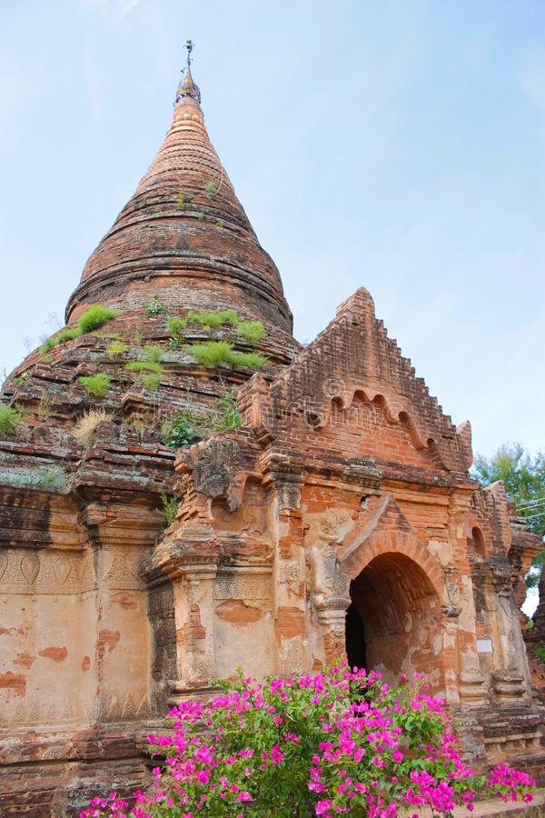Old Bagan temple in vertical with beautiful purple flowers, Myanmar Burma. stock photography