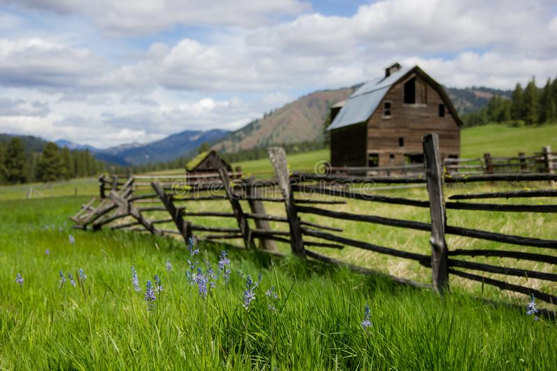 Old barn and abandoned homestead on a green grassy hillside. A beautiful old barn and homestead with fence line and abandoned orchard along the grassy hill that royalty free stock images