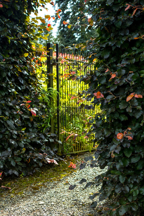 Download Beautiful Old Garden Gate With Hedges Stock Photo   Image: 68405518