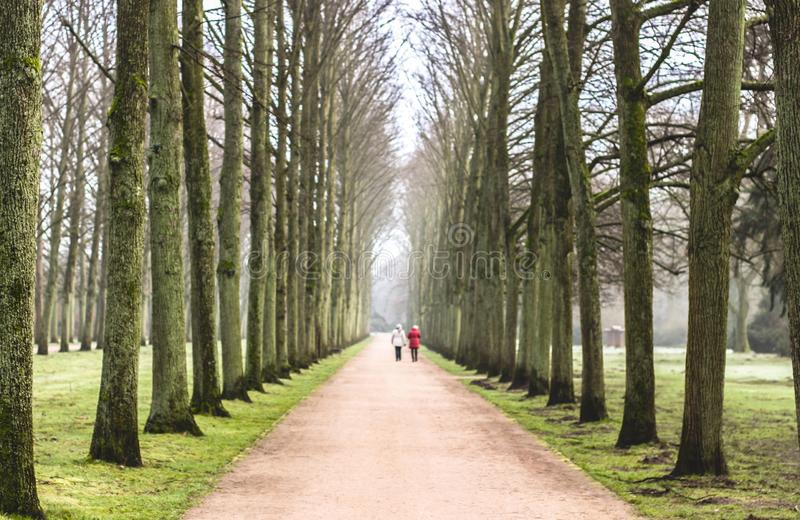Old lime tree avenue in winter, two women walking in the distance royalty free stock photos