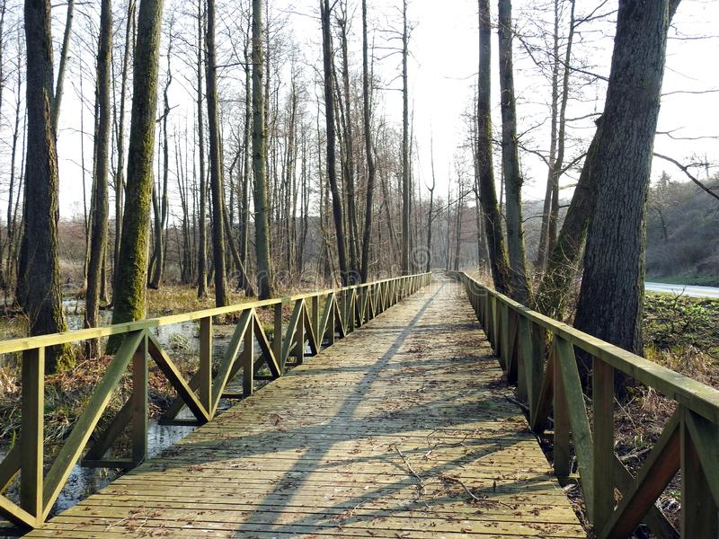 Long wooden walking path in Neringa, Lithuania stock photo